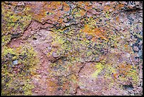 Multicolored lichen and rock. Pinnacles National Park ( color)