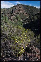 Bush in bloom and hill with rocks. Pinnacles National Park, California, USA.