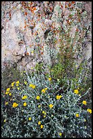 Yellow flowers and rock with lichen. Pinnacles National Park, California, USA. (color)
