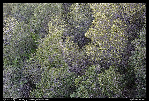 Newly leafed trees from above. Pinnacles National Park (color)