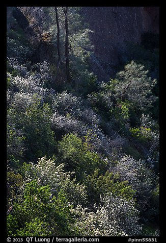 Slope with blooms in spring. Pinnacles National Park (color)