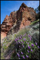 Lupine and rock towers. Pinnacles National Park ( color)