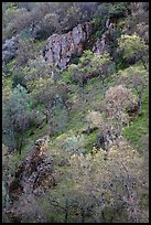 Hillside with trees and rocks in early spring. Pinnacles National Park, California, USA.