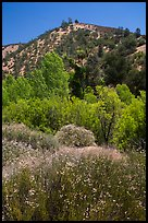 Wildflowers, trees, and hills in the hill. Pinnacles National Park, California, USA. (color)