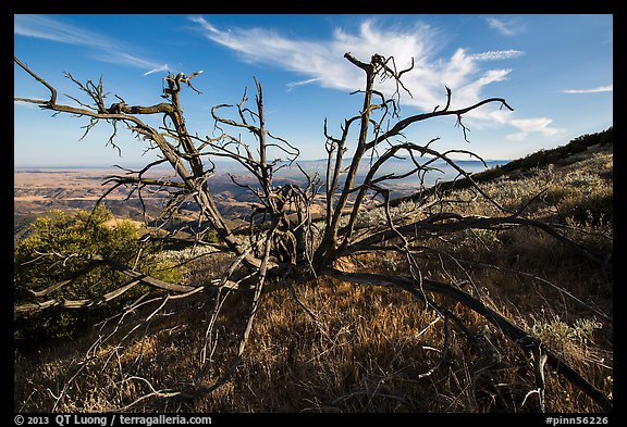 Tree skeleton near South Chalone Peak. Pinnacles National Park (color)