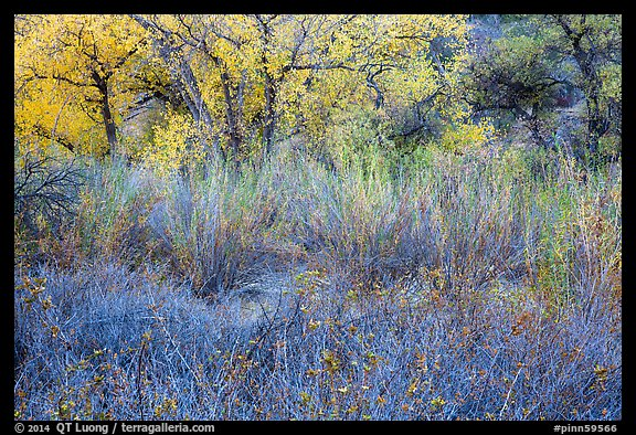 Shrubs and trees in autumn. Pinnacles National Park (color)