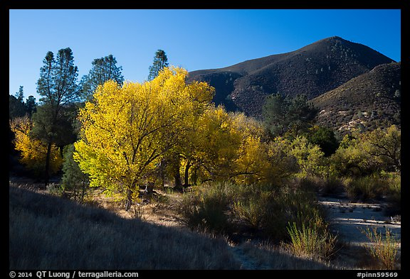 Trees and hill, early autumn morning. Pinnacles National Park (color)