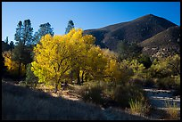 Trees and hill, early autumn morning. Pinnacles National Park, California, USA.