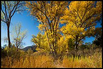 Autumn landscape with brighly colored trees. Pinnacles National Park ( color)