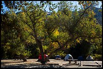 Campground. Pinnacles National Park ( color)