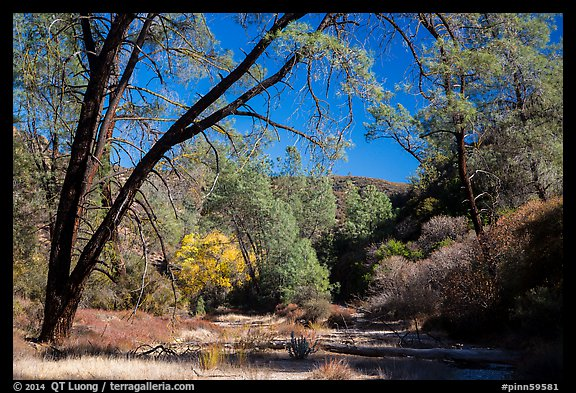 Dry Chalone Creek along Old Pinnacles Trail in autumn. Pinnacles National Park (color)
