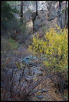 Shrubs and rocks along Dry Chalone Creek bed in autumn. Pinnacles National Park ( color)