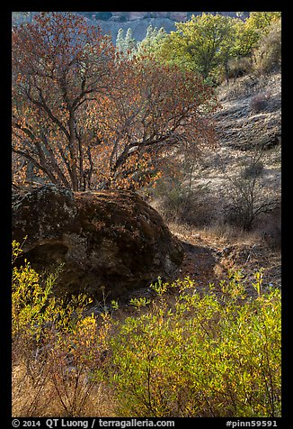 Rock and autumn foliage color along Chalone Creek. Pinnacles National Park (color)