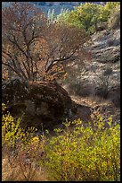 Rock and autumn foliage color along Chalone Creek. Pinnacles National Park ( color)