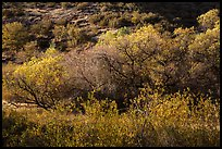 Fall foliage on creek and hill near Balconies. Pinnacles National Park, California, USA.