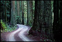 Twisting Howland Hill Road, Jedediah Smith Redwoods. Redwood National Park, California, USA.