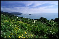 Wildflowers and Ocean near Klamath overlook. Redwood National Park, California, USA.