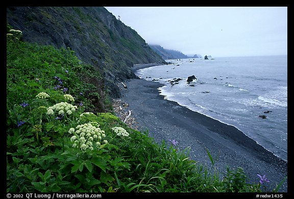 Coastline with black sand beach and wildflowers. Redwood National Park, California, USA.