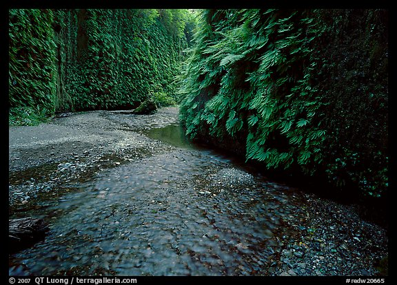 Stream and walls covered with ferms, Fern Canyon. Redwood National Park (color)