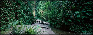 Gorge with fern-covered walls. Redwood National Park (Panoramic color)