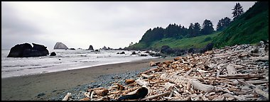 Beach with driftwood. Redwood National Park (Panoramic color)