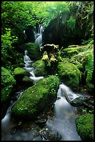 Cascade and mossy rocks, Prairie Creek Redwoods State Park. Redwood National Park, California, USA.