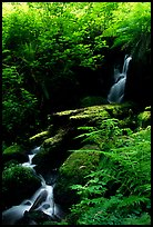 Waterfall, Prairie Creek. Redwood National Park, California, USA. (color)