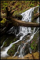 Fern Falls, Jedediah Smith Redwoods State Park. Redwood National Park ( color)