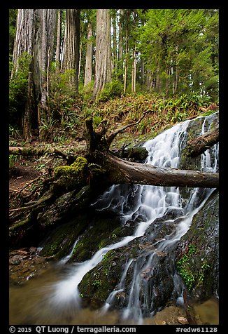 Fern Falls and redwood trees, Jedediah Smith Redwoods State Park. Redwood National Park (color)