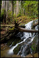 Fern Falls and redwood trees, Jedediah Smith Redwoods State Park. Redwood National Park ( color)