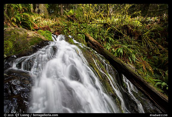 Upper cascades of Fern Falls and fallen tree, Jedediah Smith Redwoods State Park. Redwood National Park (color)