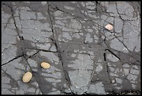 Close-up of rock slab with pebbles and shell, Enderts Beach. Redwood National Park ( color)