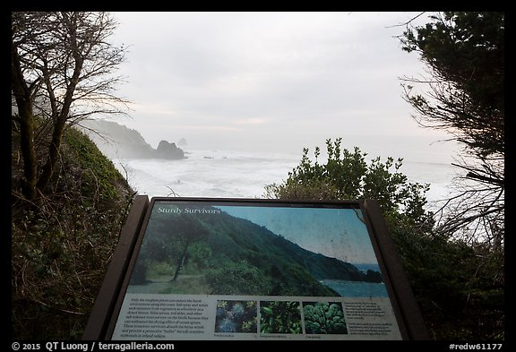 Coastline and Sturdy survivors interpretive sign. Redwood National Park (color)