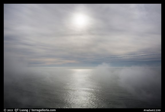 Veilled sun and fog floating above Ocean. Redwood National Park (color)