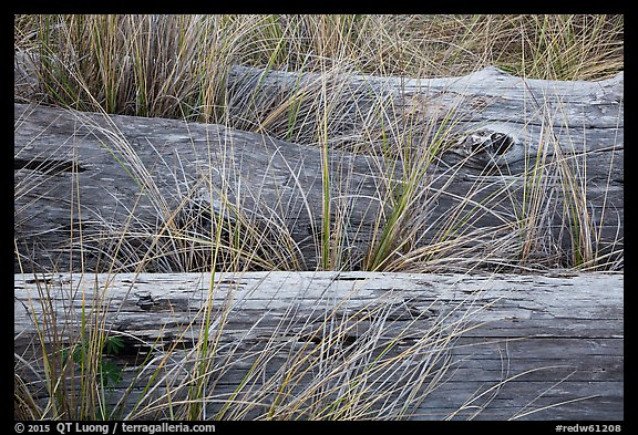 Weathered driftwood logs in tall grass, Prairie Creek Redwoods State Park. Redwood National Park (color)