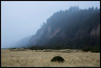 Gold Bluffs in the fog, Prairie Creek Redwoods State Park. Redwood National Park ( color)