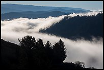 Ridges and low fog, Klamath River valley. Redwood National Park ( color)