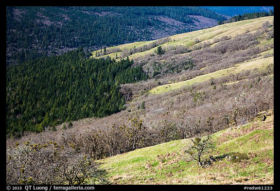 Oak woodlands and evergreens in winter from Childs Hill. Redwood National Park (color)