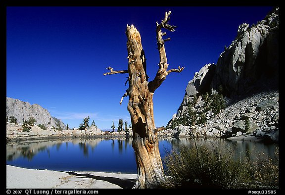 Tree skeleton, Mirror Lake, and Thor Peak, Inyo National Forest. California, USA