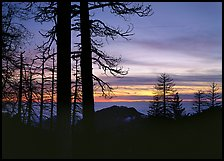 Bare trees in winter and sea of clouds at sunset. Sequoia National Park, California, USA. (color)