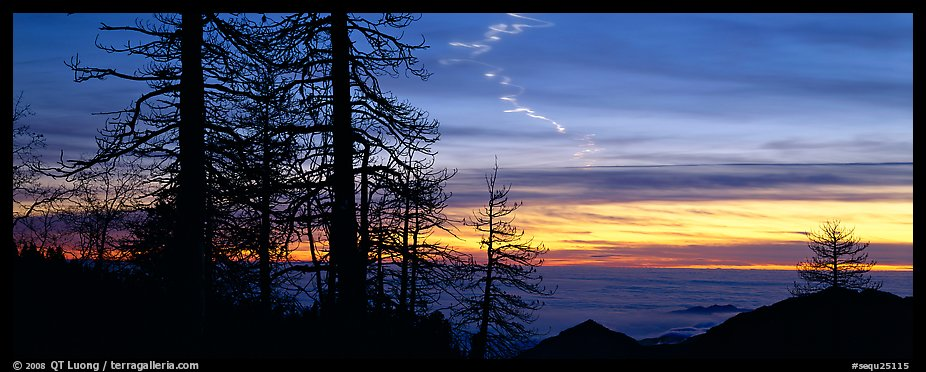 Trees and contrail at sunset. Sequoia National Park (color)