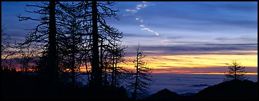 Trees and contrail at sunset. Sequoia National Park (Panoramic color)