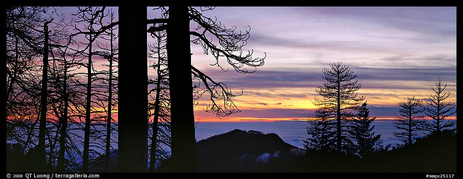 Sea of clouds and trees at sunset. Sequoia National Park (color)