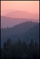 Receding tree-covered mountain ridges at sunset. Sequoia National Park, California, USA. (color)