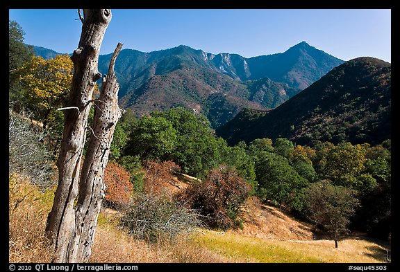 Sierra Nevada hills with bird-pegged tree. Sequoia National Park (color)