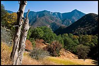 Sierra Nevada hills with bird-pegged tree. Sequoia National Park, California, USA. (color)