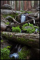 Cascading stream in sequoia forest. Sequoia National Park, California, USA. (color)