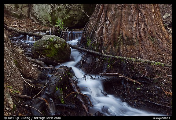 Stream at base of sequoia tree. Sequoia National Park (color)