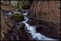 Stream at base of sequoia tree. Sequoia National Park ( color)