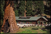 Giant Forest Museum. Sequoia National Park, California, USA.